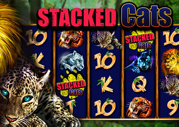 Stacked Cats Slot Game